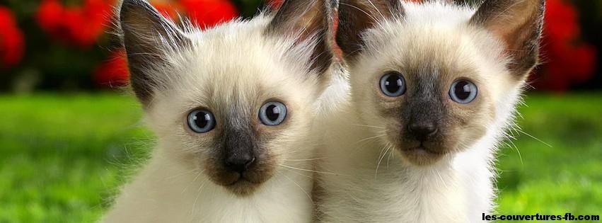 chatons jumeaux-photo de couverture-journal facebook
