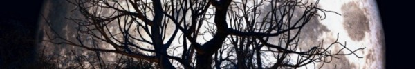 forêt d'halloween - Photo de couverture journal Facebook