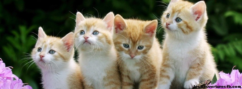 Chatons trop mignon photo de couverture facebook - Photo chatons trop mignon ...