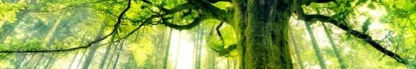 Grand arbre vert-Photo de couverture journal Facebook