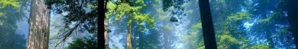 Arbres dans la forêt-photo de couverture journal facebook