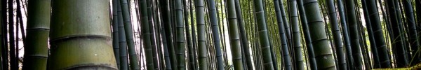Bambou- Photo de couverture journal Facebook
