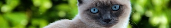 Chat sur fond verdure photo de couverture facebook