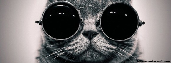 chat à lunettes-photo de couverture-journal facebook