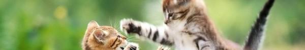 combat chatons-photo de couverture journal facebook