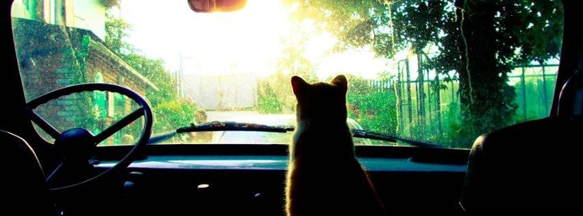 le chat devant -Photo de couverture journal Facebook