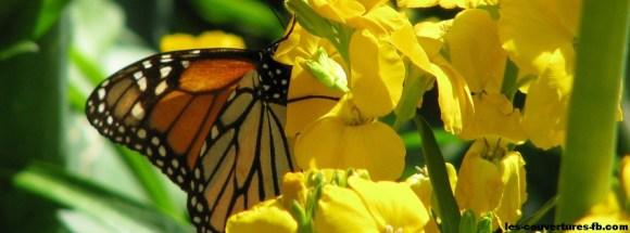 papillon-photo-de-couverture-journal-facebook.jpg