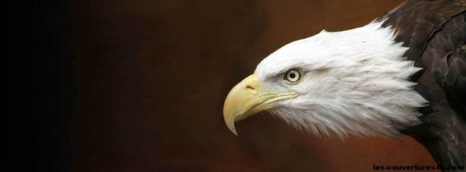Aigle-photo de couverture journal facebook