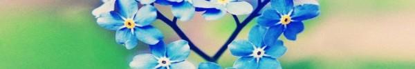 couleurs de fleur bleu -Photo de couverture journal Facebook