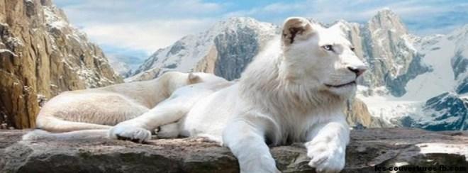 lion d'hiver-photo de couverture journal facebook