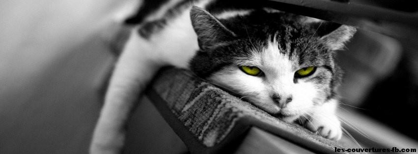 Chat fatigué -Photo de couverture journal Facebook