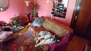 Salon avec husky