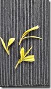 Anji-bai-cha-feuilles-jaunes-the-vert-de-chine-les-filles-du-the