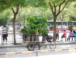 A gardener delivering plants on a bike at Beijing