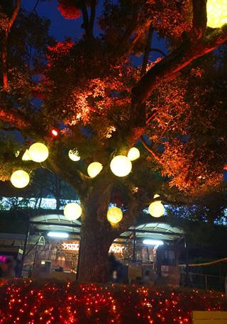 ひらパー,光の遊園地,木の下に丸いぼんぼりのような照明がつけられている