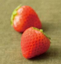 苺の誘惑,いちご,