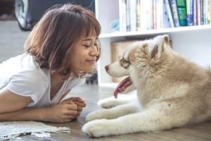 rencontre chien bebe preparer son chien à l'arrivée de bébé
