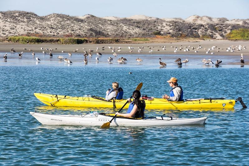 observer les oiseaux en kayak