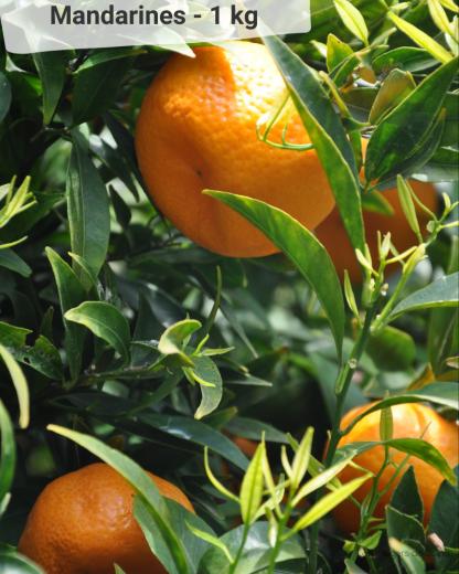 Mandarine - VERGERS DE BOIRIE A MENTON