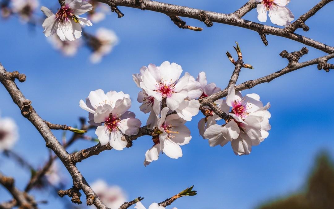 A l'orée du printemps… quand le vivant frappe à votre porte !