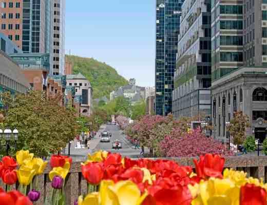 Un printemps à Montréal