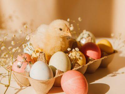 """""""L'œuf ou la poule"""" un jeu amusant pour Pâques!"""