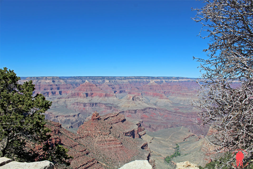 Grand Canyon + Végétation