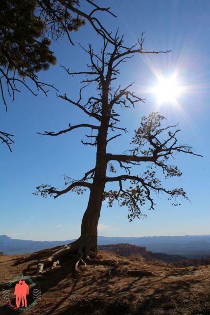 Arbre contre jour Bryce Canyon