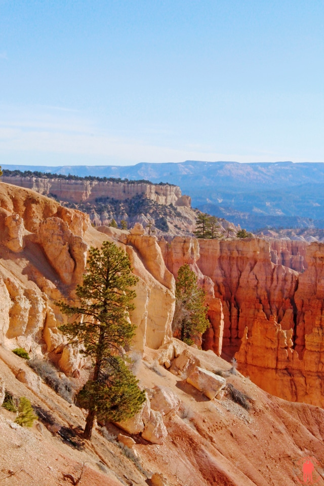 Bryce-Canyon-Utah-Arbre