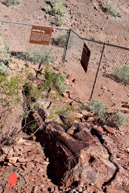 Tronc pétrifié, Vallée du feu, Nevada