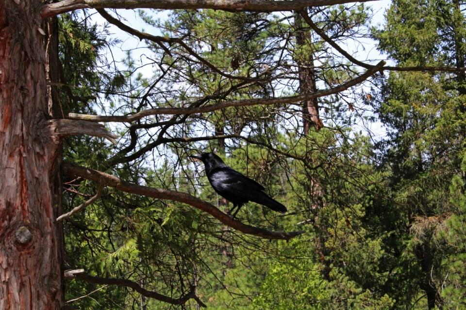 Oiseau du Yosemite parc