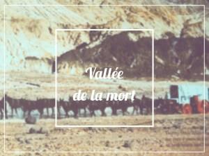 Mules Vallée de la Mort