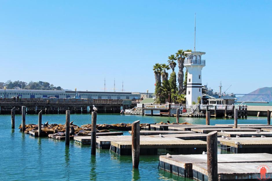 Otaries Pier 39 - San Francisco