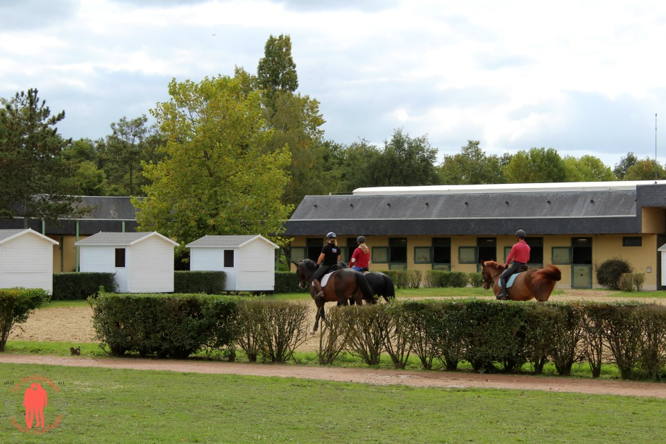 Plusieurs cavaliers à l'entrainement cadre noir