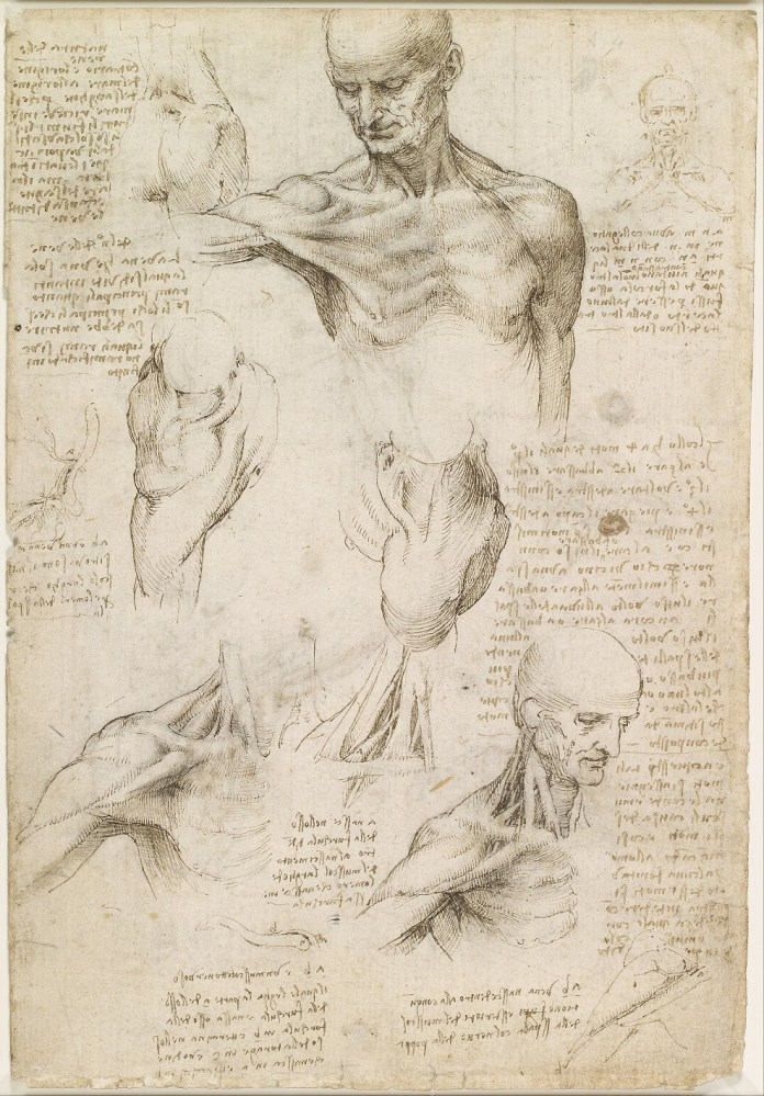 Les carnets de notes de Léonard de Vinci sont maintenant accessibles en ligne Leonardo_da_Vinci_-_Superficial_anatomy_of_the_shoulder_and_neck_recto_-_Google_Art_Project