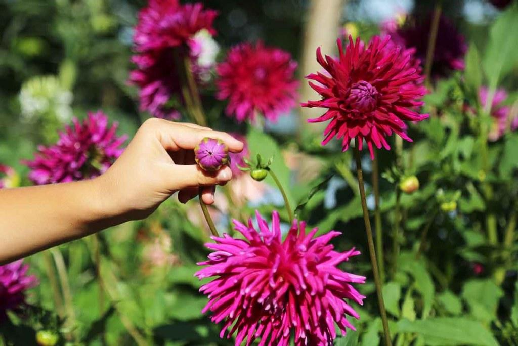 bois-fleuri-mimizan