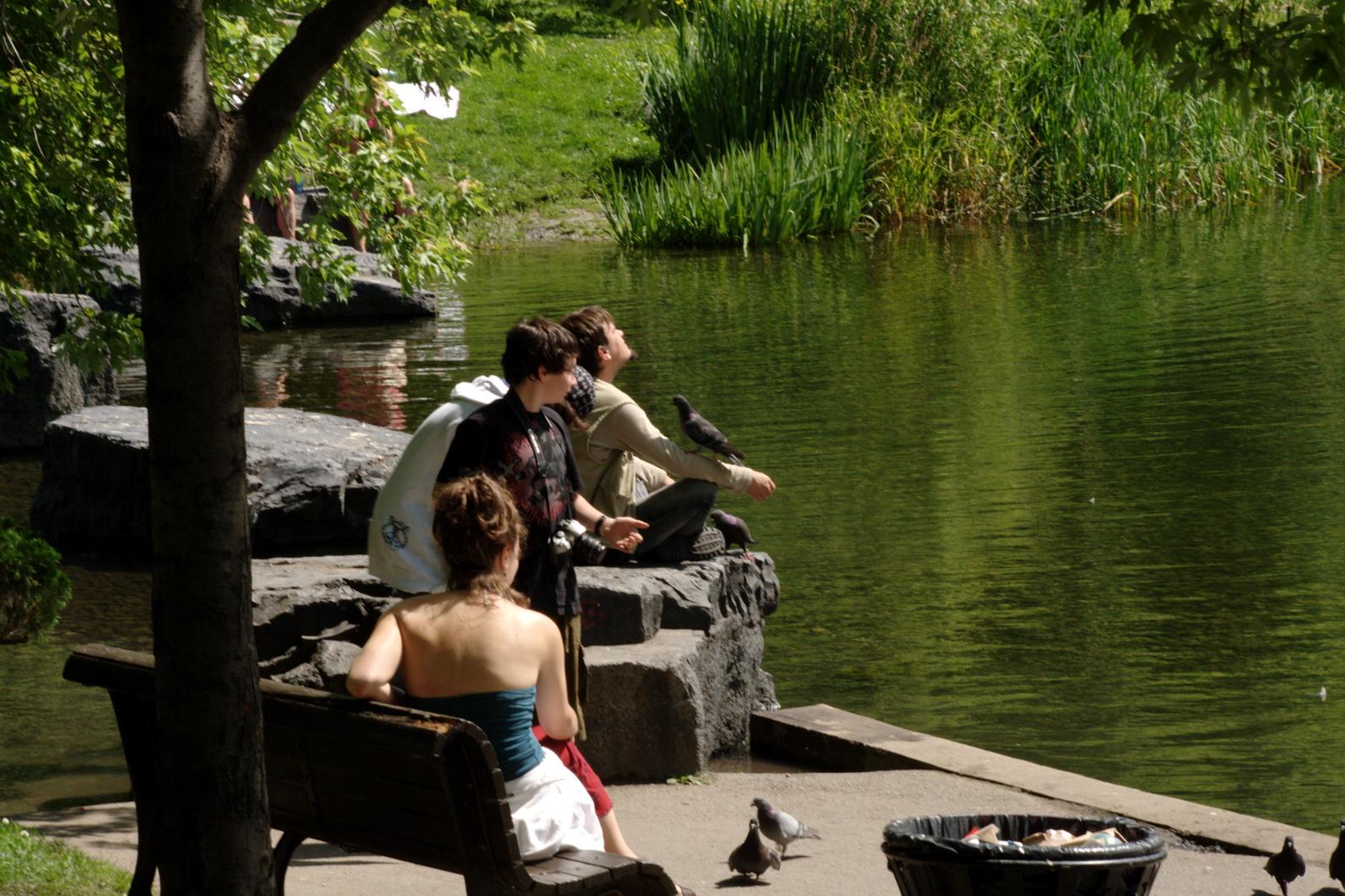 Une histoire toute simple. Un homme, des oiseaux, des enfants curieux.