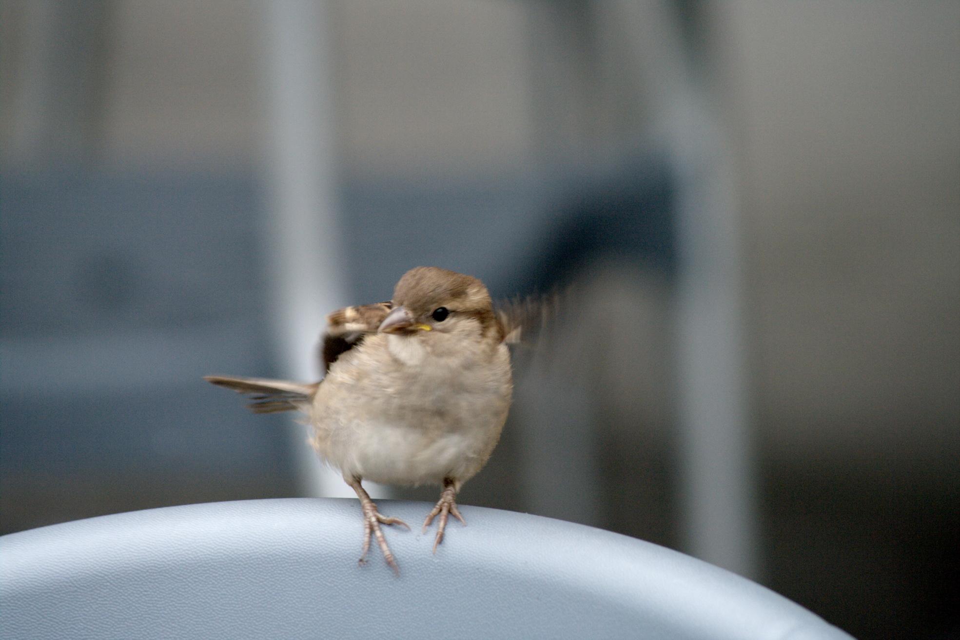Un battement d'ailes. J'ai ma réponse. Adieu moineau