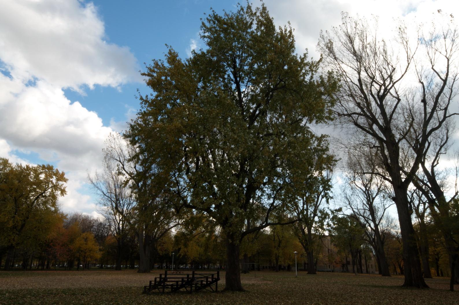 Chronique d_un jour d_automne_002