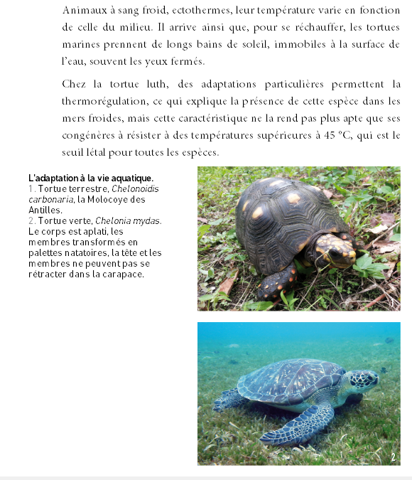 « Tortues Marines de la Caraïbe » – Laurent Louis-Jean SCITEP