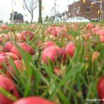 10202007-Apple_Field_Sky_Orig_Apples_450px.jpg (A Fascination with Fakery)