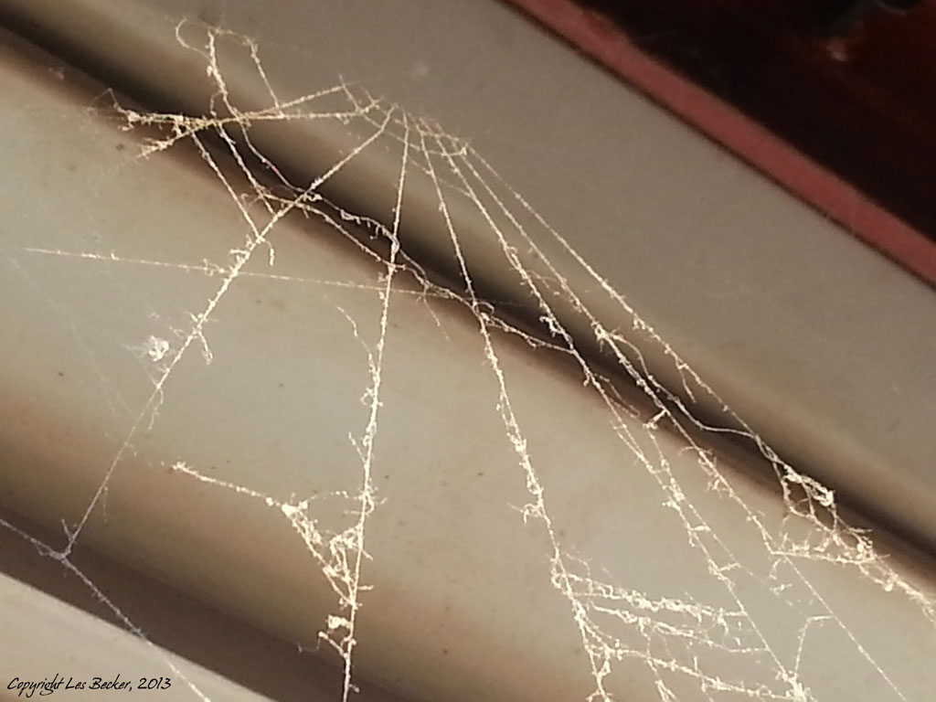 Cobweb Curtains