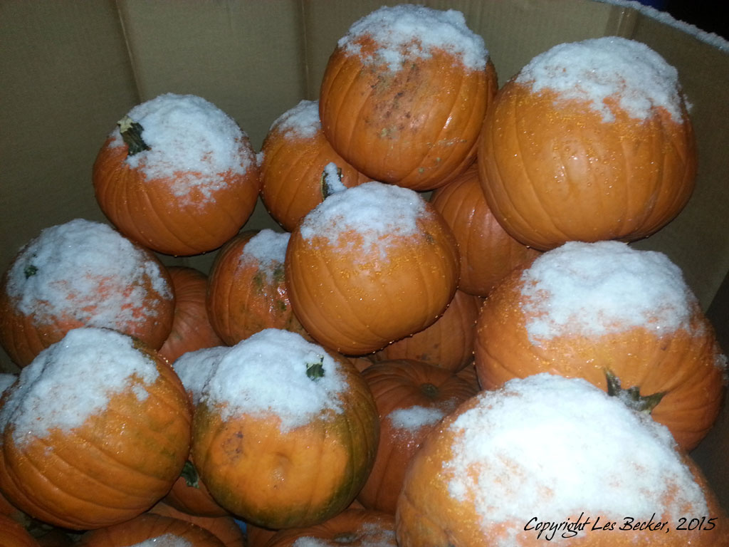 Frost on the Pumpkins