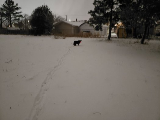 Black dog running after a first snowfall.