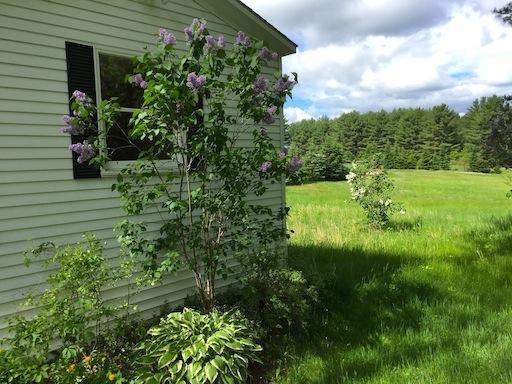 Side Lilacs, 368 School Street, New Portland, ME 04961