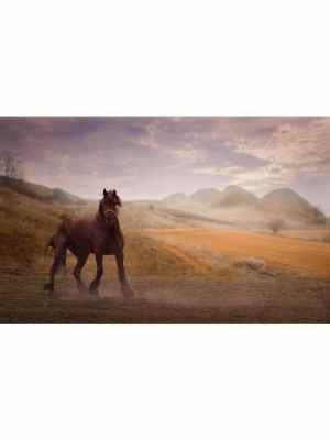 Un magnifique cheval marron semblant danser seul sur un sol vert et jaune au milieu des montagne grises au couleurs apaisantes du lever du jour. Idéal pour la décoration d'un salon ou d'une chambre, pour un intérieur zen et nature.