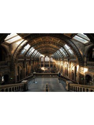 MUSEUM HISTOIRE NATURELLE LONDRES