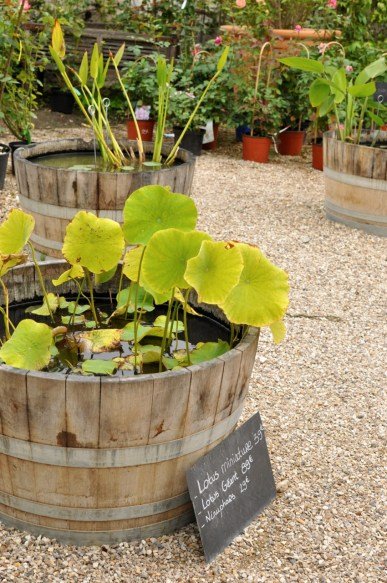 Lotus et nénuphars à Giverny