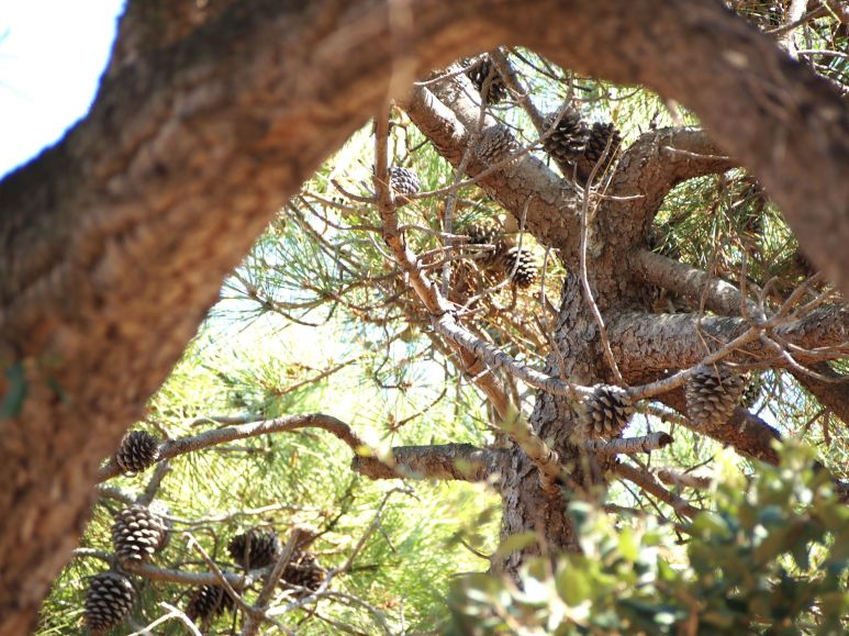Pic-nic sous les pins
