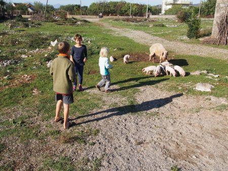 Les joies de la ferme en Albanie